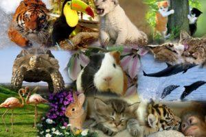 animales en portugués