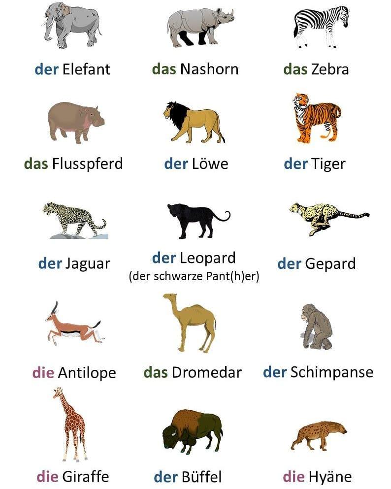 animales en alemán