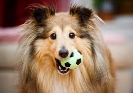 Términos caninos
