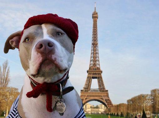 animales en francés