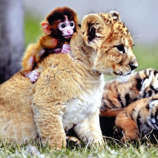 el mundo animal