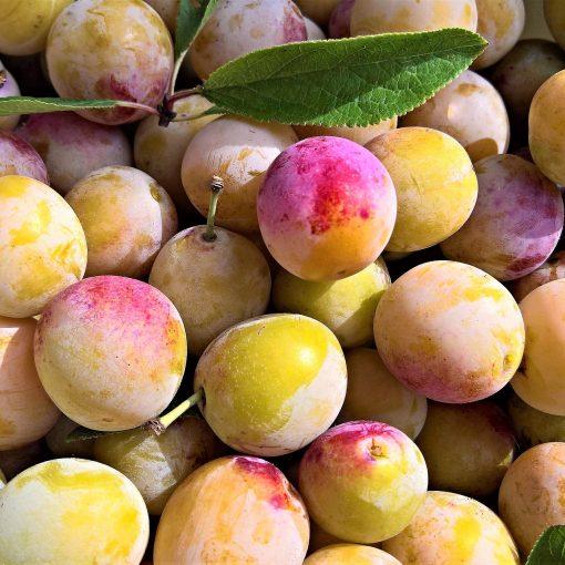 frutas francesas